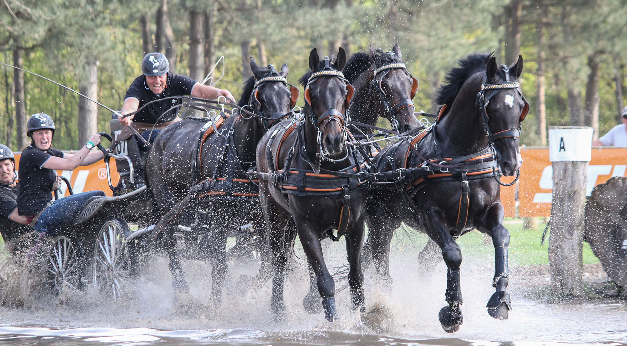 IJsbrand Chardon_horsedrivingkronenberg